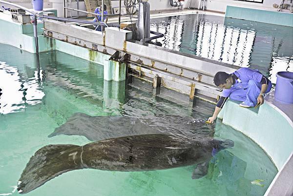 沖繩美麗海水族館-23.jpg