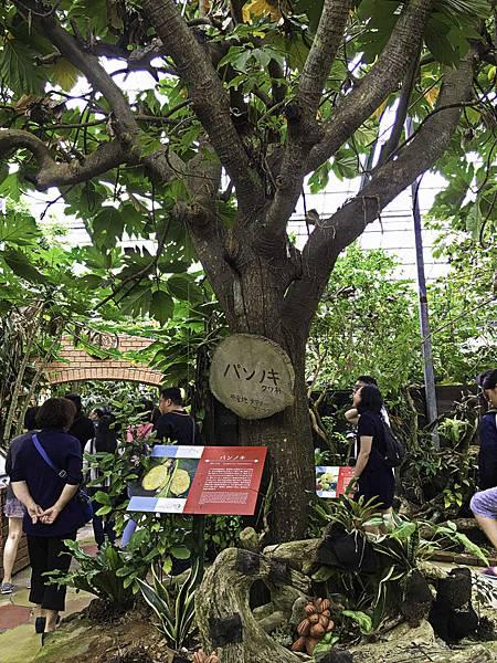 名護鳳梨公園,水果樂園-20.jpg