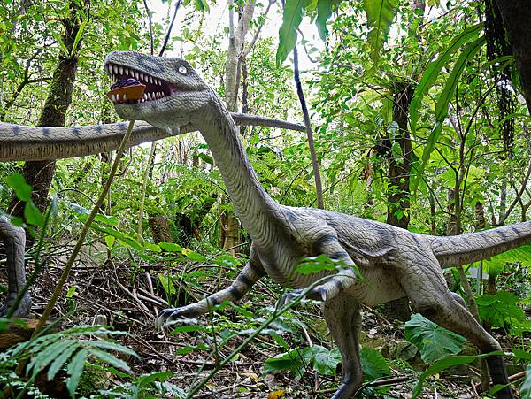 沖繩恐龍,dino恐龍公園-23.jpg
