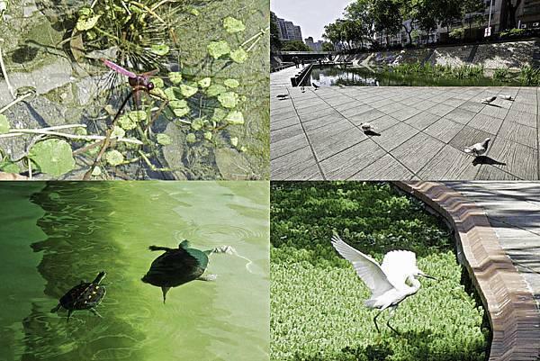 新莊大排,三重水樣公園-43.jpg