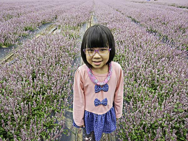 桃園,楊梅,仙草花,紫色花海-6.jpg