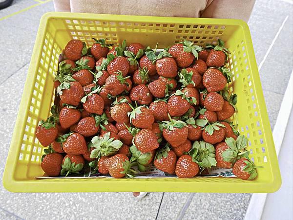 大湖草莓,牛奶草莓-9.jpg