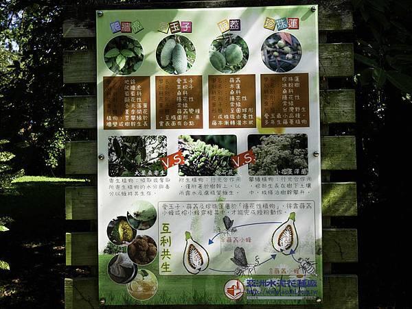 亞泥蝴蝶生態園區-18.jpg