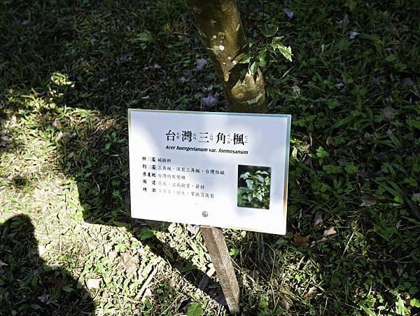 亞泥蝴蝶生態園區-48.jpg