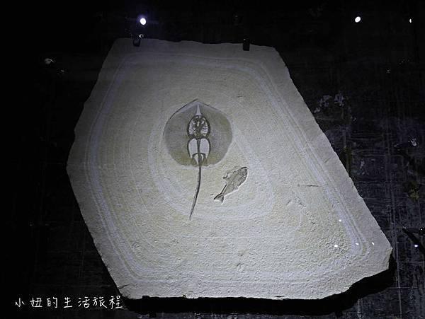 宜蘭蘇澳Robert-Y瘋狂夢想博物館-29.jpg
