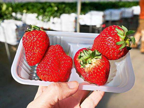 東京,採草莓,富士山,河口湖,纜車-5.jpg
