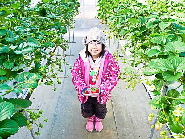 東京,採草莓,富士山,河口湖,纜車-10.jpg