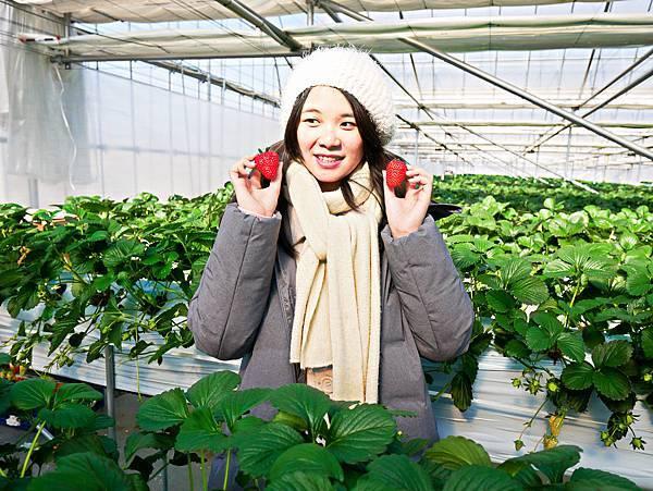 東京,採草莓,富士山,河口湖,纜車-11.jpg