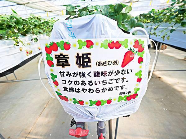 東京,採草莓,富士山,河口湖,纜車-12.jpg