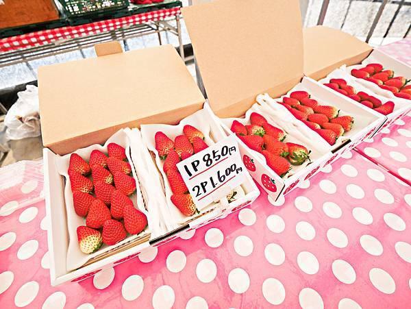 東京,採草莓,富士山,河口湖,纜車-16.jpg
