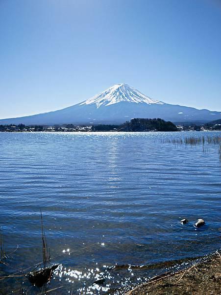 東京,採草莓,富士山,河口湖,纜車-19.jpg