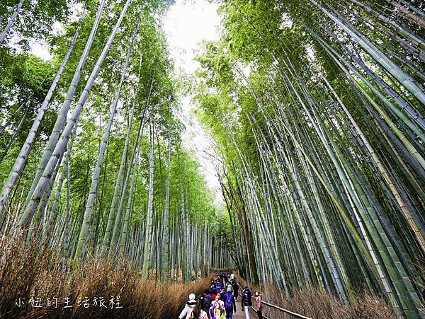 京都嵐山景點-31.jpg