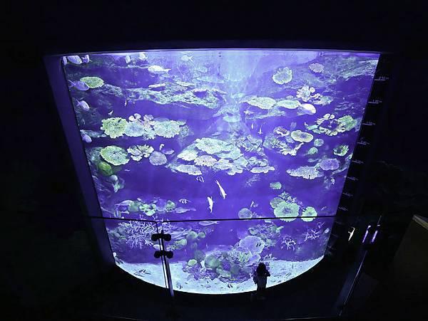 曼谷 海洋公園-9.jpg