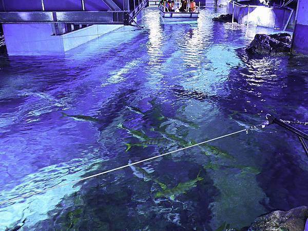 曼谷 海洋公園-13.jpg