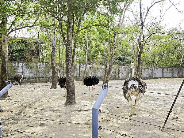 曼谷 動物園-6.jpg