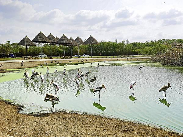 曼谷 動物園-8.jpg