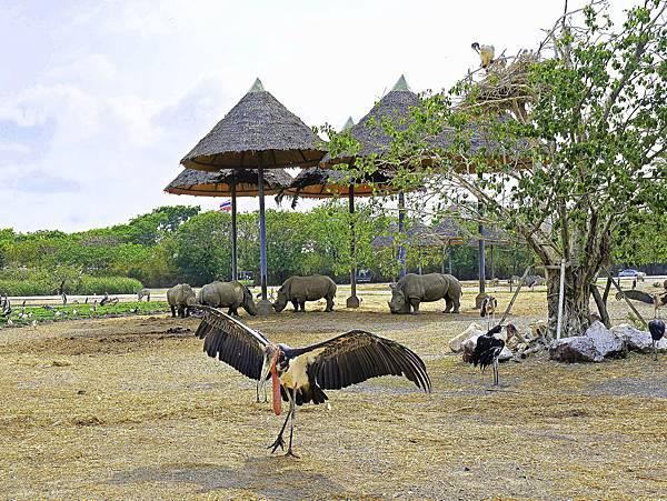 曼谷 動物園-10.jpg