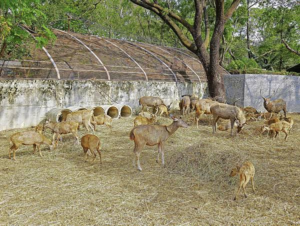 曼谷 動物園-11.jpg