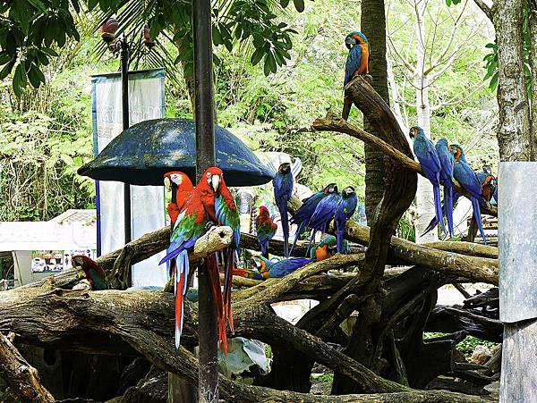 曼谷 動物園-19.jpg