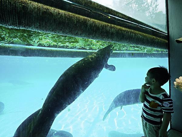 曼谷 動物園-25.jpg