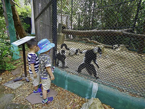 曼谷 動物園-27.jpg
