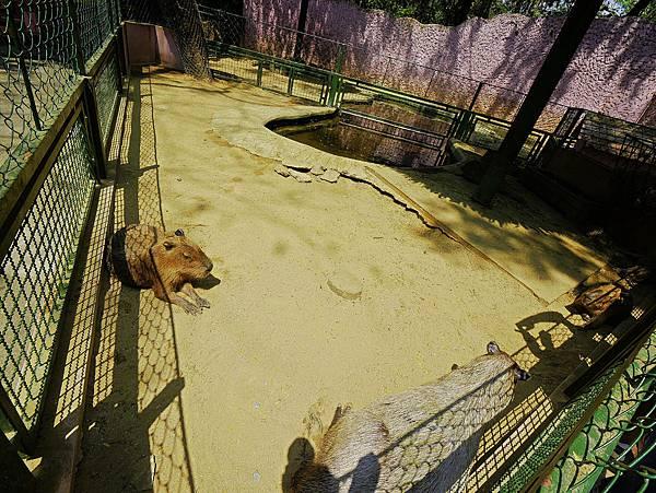曼谷 動物園-29.jpg