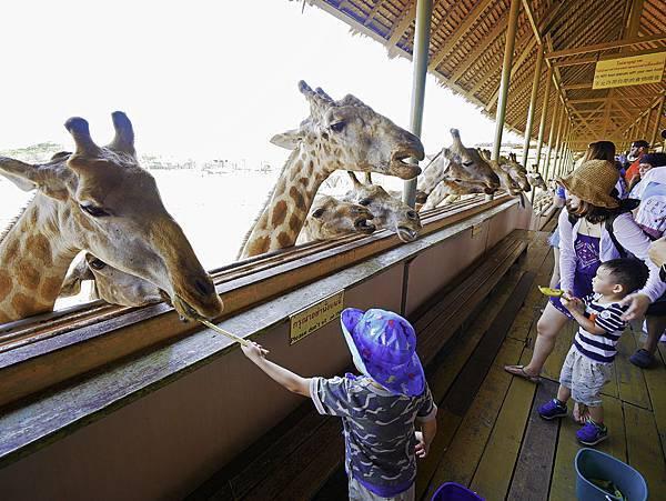 曼谷 動物園-35.jpg
