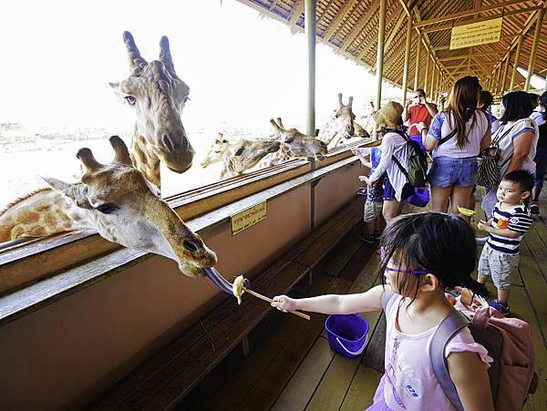 曼谷 動物園-36.jpg