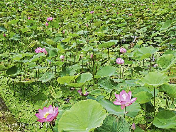 品陽大苑,台北-41.jpg