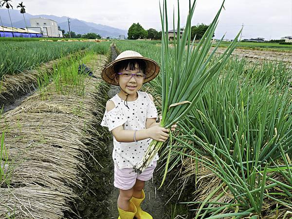 宜蘭 蔥寶寶 體驗農場-12.jpg