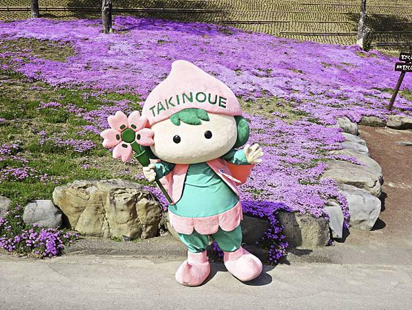 滝上芝櫻公園-9.jpg