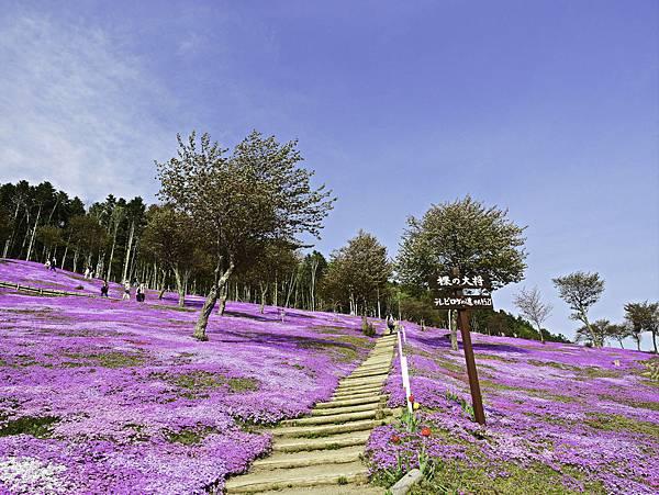 滝上芝櫻公園-14.jpg