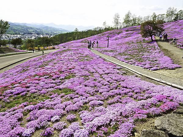 滝上芝櫻公園-16.jpg