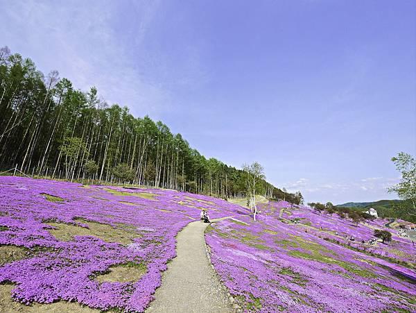 滝上芝櫻公園-17.jpg