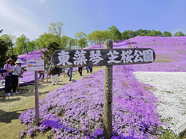 東藻琴芝櫻公園-4.jpg
