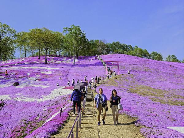 東藻琴芝櫻公園-5.jpg