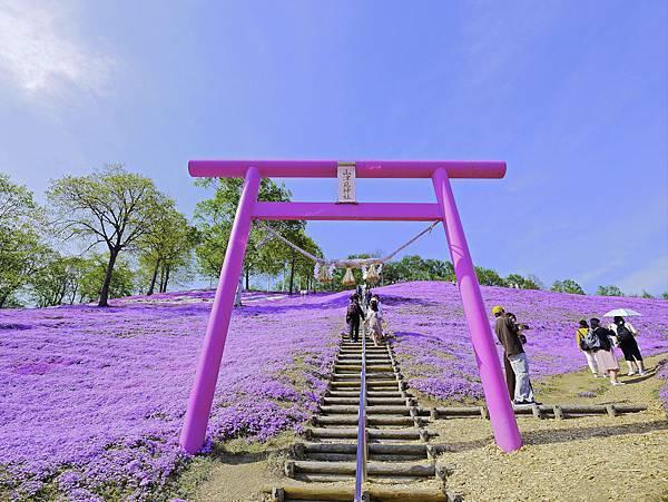 東藻琴芝櫻公園-7.jpg
