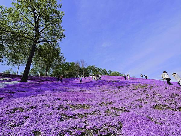 東藻琴芝櫻公園-9.jpg