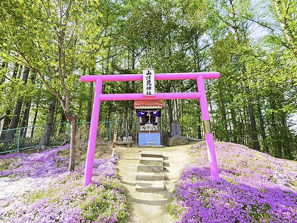 東藻琴芝櫻公園-10.jpg