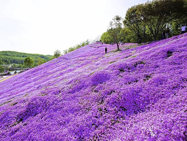 東藻琴芝櫻公園-14.jpg