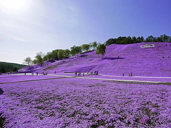 東藻琴芝櫻公園-21.jpg