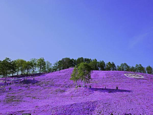 東藻琴芝櫻公園-22.jpg