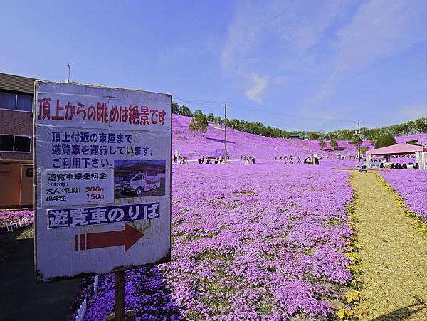 東藻琴芝櫻公園-23.jpg