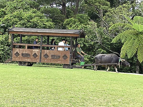 沖繩套票,美麗海,恐龍,名護動物園-2.jpg