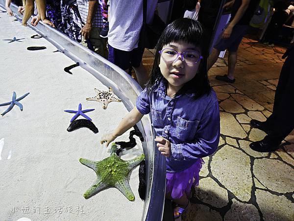 沖繩套票,美麗海,恐龍,名護動物園-15.jpg