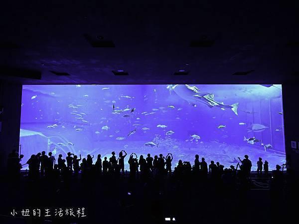 沖繩套票,美麗海,恐龍,名護動物園-16.jpg