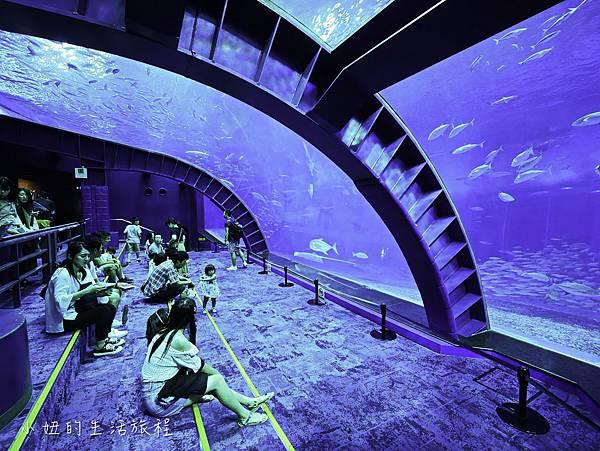 沖繩套票,美麗海,恐龍,名護動物園-17.jpg