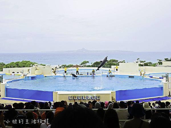沖繩套票,美麗海,恐龍,名護動物園-19.jpg