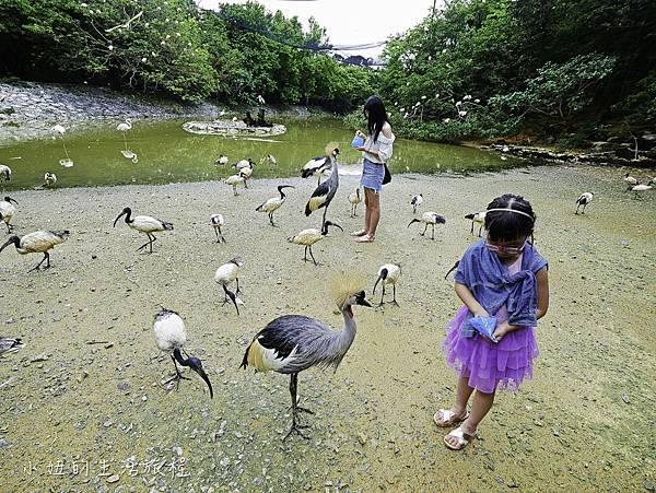 沖繩套票,美麗海,恐龍,名護動物園-26.jpg