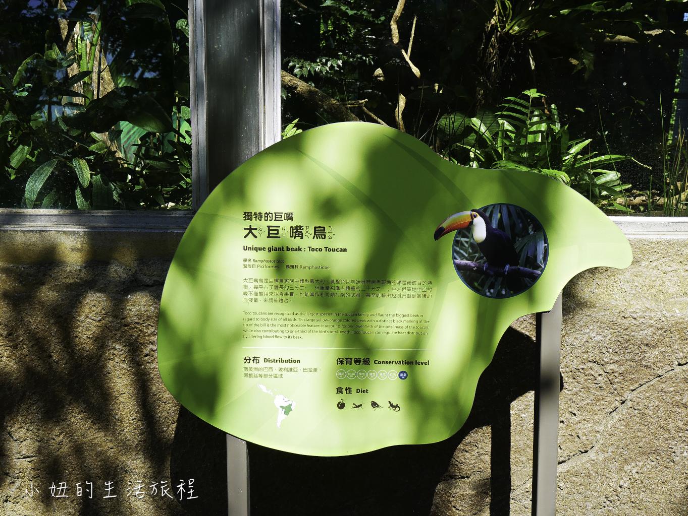 木柵動物園,穿山甲館,熱帶雨林館,2019-26.jpg